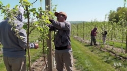 Pennsylvania Farmers Fear Labor Shortage from Immigration Crackdown