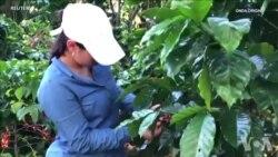 运用区块链技术管理咖啡种植进口和烘焙