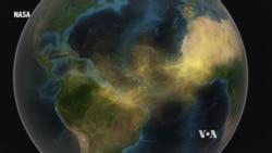 Saharan Dust Feeds Amazon Rainforest