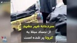 کرونا در ایران | سردخانه شهر مشهد از اجساد مبتلا به کرونا پر شده است