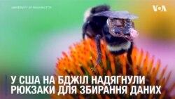 """Сенсорні """"рюкзаки"""" для бджіл розробили у США, щоб збирати дані. Відео"""