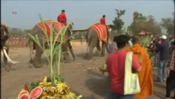 THAILAND ELEPHANT VO