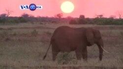 Manchetes Africanas 28 Julho 2014