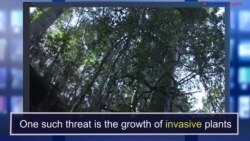 News Words: Invasive