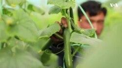 رونق فارمهای کوچک زراعتی در افغانستان