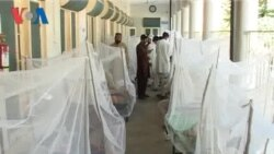 Dengue in Swat