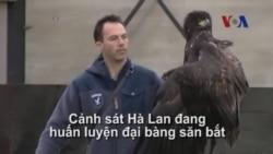 Huấn luyện đại bàng 'săn' máy bay không người lái