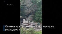 Мечка се разладува во двор во Конетикан