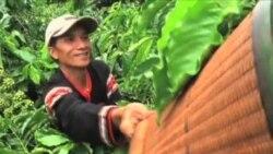 Ngành cà phê Việt Nam thức giấc